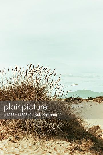 Dünen und Strandgras - p1255m1152849 von Kati Kalkamo