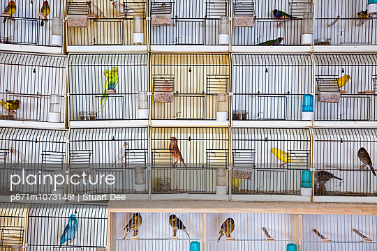 Caged birds, pet and bird market, Paris, France, Europe