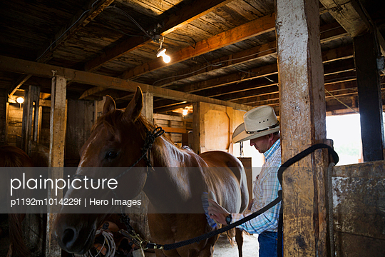 Rancher brushing horse in barn