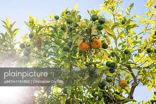 Algarve - p947m1161802 von Cristopher Civitillo