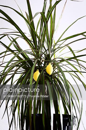 Dekorierte Zimmerpflanze - p1149m1162773 von Yvonne Röder