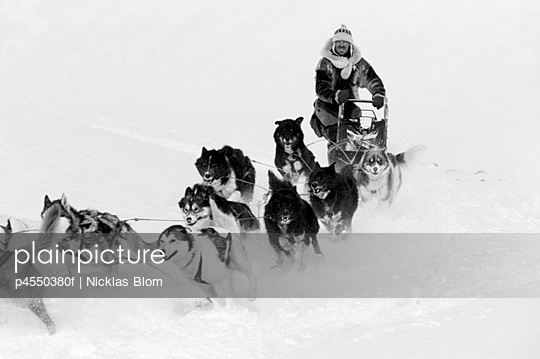 Dogs and a man, dog sledding in Svalbard, Norway