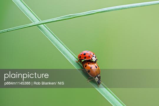 p884m1145388 von Rob Blanken/ NIS