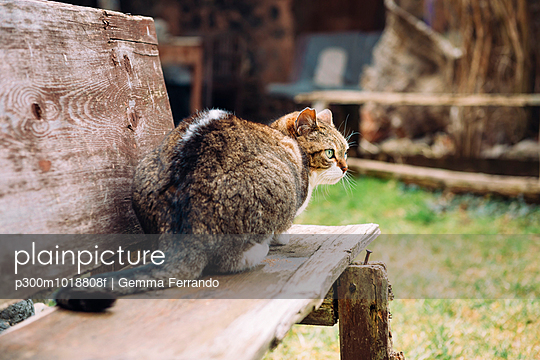 Cat sitting on a wooden bench