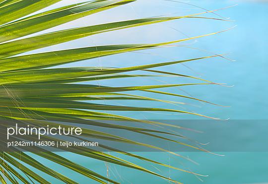 Palmenblatt - p1242m1146306 von teijo kurkinen