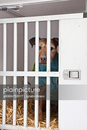 Dog captured