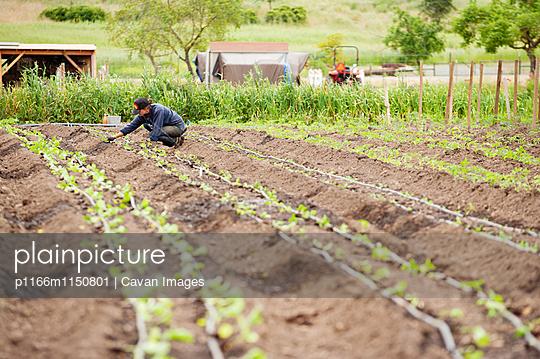 p1166m1150801 von Cavan Images