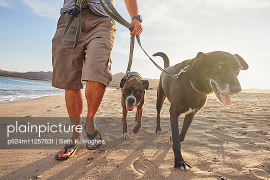 Owner walking dogs on beach