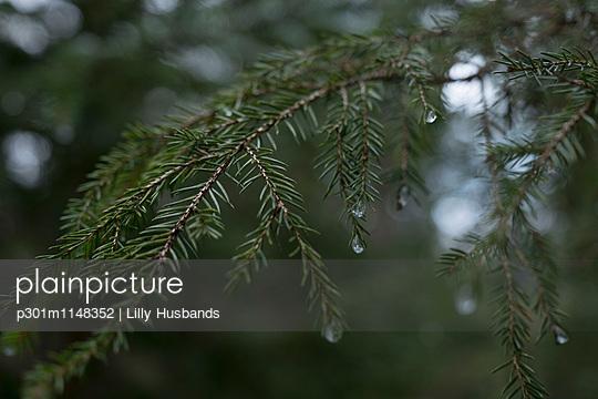 p301m1148352 von Lilly Husbands