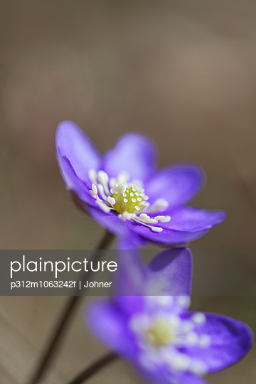 Blue flowers, close-up