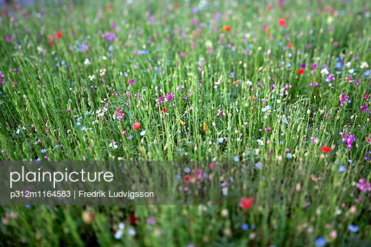 p312m1164583 von Fredrik Ludvigsson