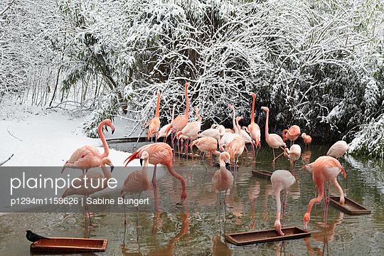 Flamingo - p1294m1159626 von Sabine Bungert