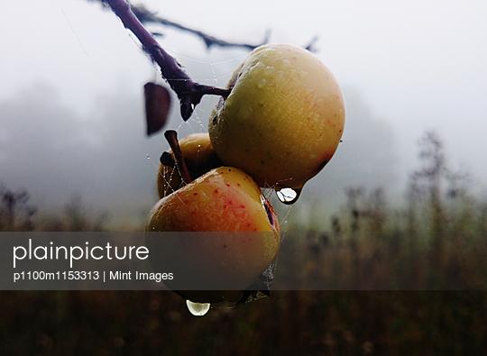 p1100m1153313 von Mint Images