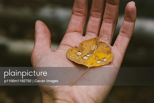 p1166m1182792 von Cavan Images