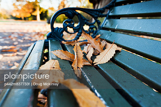 Fallen autumn coloured leaves on a park bench in St. James\'s Park; London, England