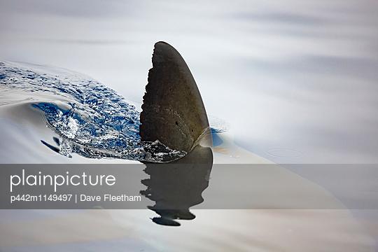 p442m1149497 von Dave Fleetham
