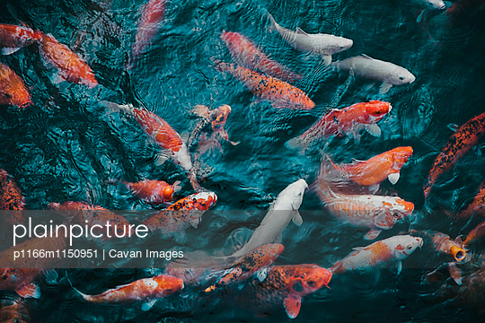 p1166m1150951 von Cavan Images