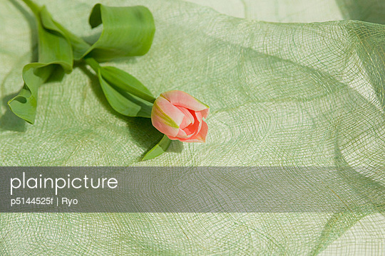 Pink tulip on green cloth