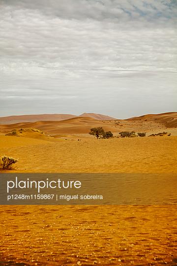 Wüstenlandschaft - p1248m1159867 von miguel sobreira