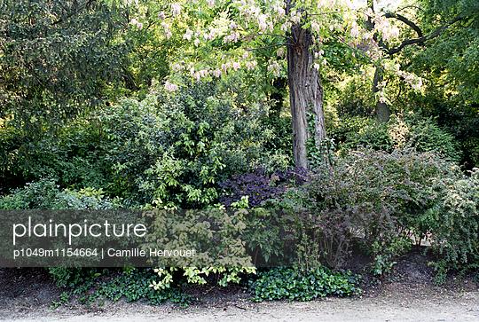 Parc des Buttes Chaumont - p1049m1154664 von Camille Hervouet
