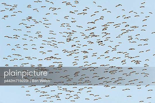 A flock of birds in a blue sky; tarifa cadiz andalusia spain
