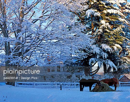 Horses in winter scene