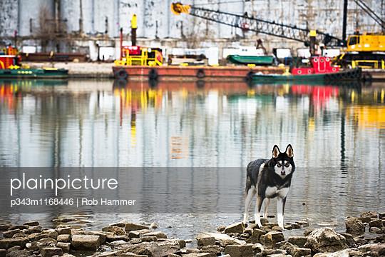 p343m1168446 von Rob Hammer