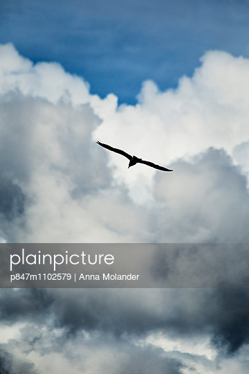 Silhouette Of Flying Bird Against Clouds And Blue Sky