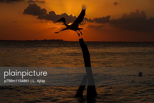 Pelikan im Sonnenuntergang vor der Isla Mujueres - p758m1154861 von L. Ajtay
