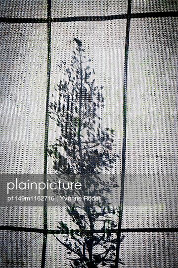 Bauzaun mit Pflanzenschatten - p1149m1162716 von Yvonne Röder