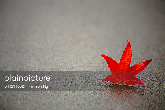 Red Leaf On Concrete