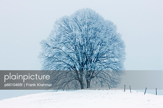 Winter landscape with snow covered lime tree