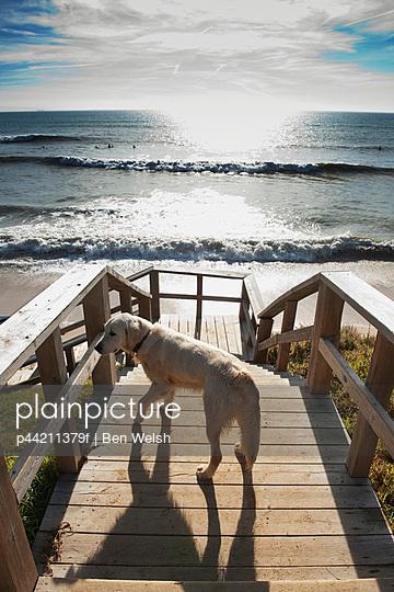 A Dog On The Boardwalk By Hurricane Hotel Beach At Tarifa, Costa De La Luz