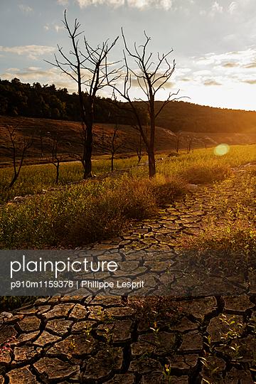 Ausgetrocknete Landschaft in der Abendsonne - p910m1159378 von Philippe Lesprit