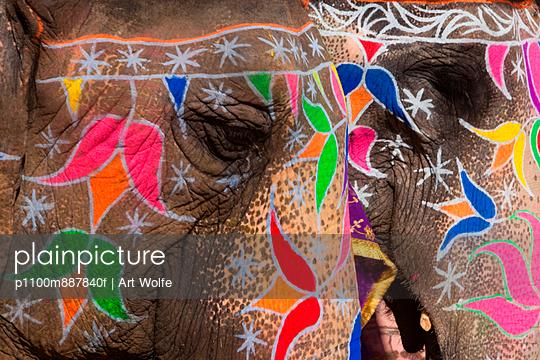 Elaborately adorned elephants during Holi