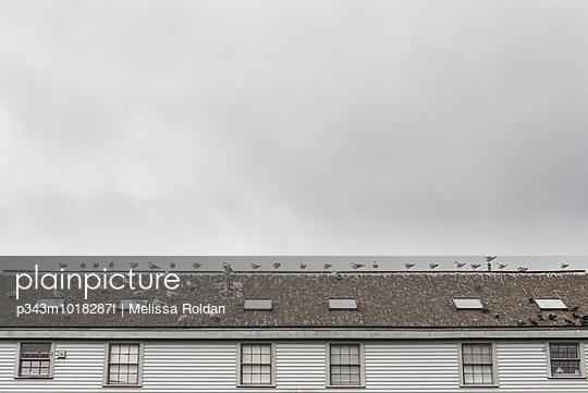 Seagulls on roof on Portland Harbor