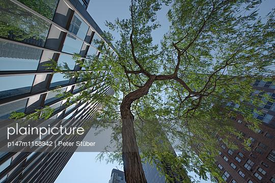 Baum in New York City - p147m1158942 von Peter Stüber
