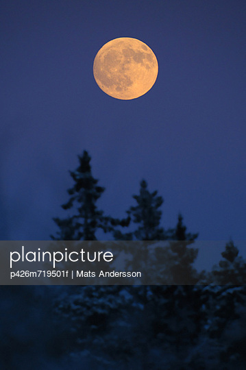 Scenic view of full moon on treetop in forest