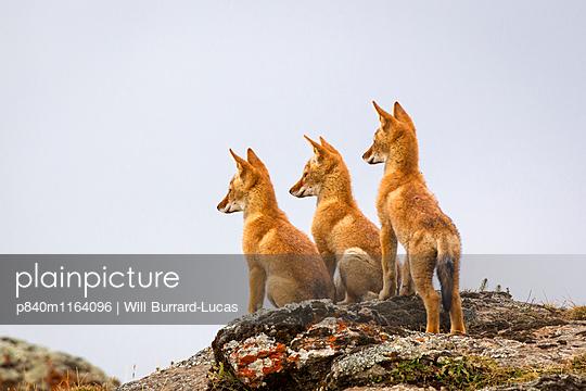 p840m1164096 von Will Burrard-Lucas