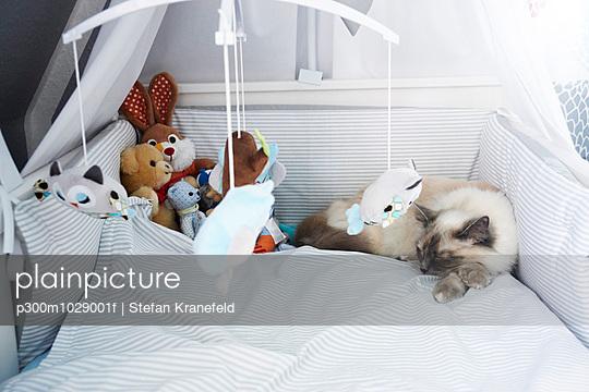 Cat lying in crib