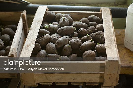 p429m1156249 von Aliyev Alexei Sergeevich