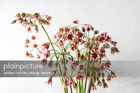 p300m1153798 von Mandy Reschke