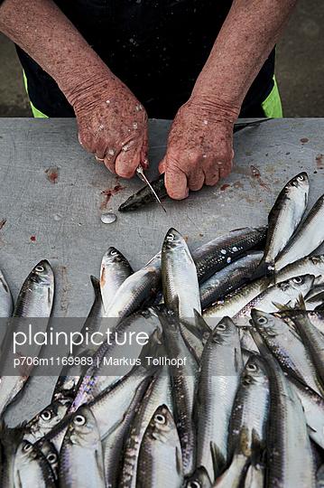 Fische ausnehmen - p706m1169989 von Markus Tollhopf