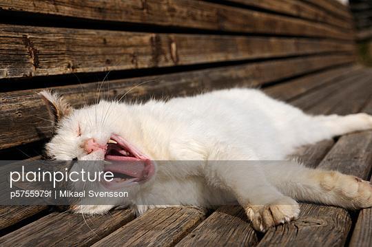 Europe, Austria, Cat lying on bench