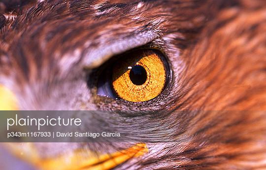p343m1167933 von David Santiago Garcia