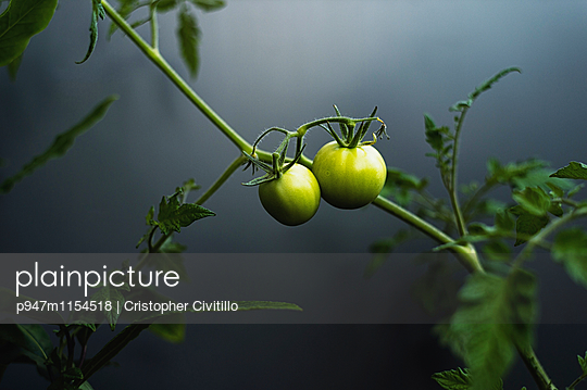Unreife Tomaten - p947m1154518 von Cristopher Civitillo