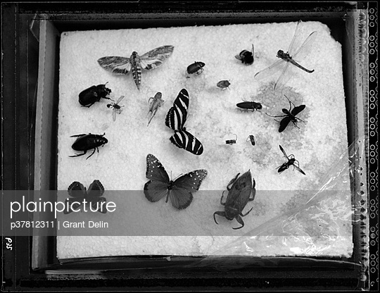 Insects pinned to styrofoam