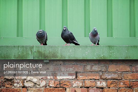 Drei Tauben - p1280m1161905 von Dave Wall