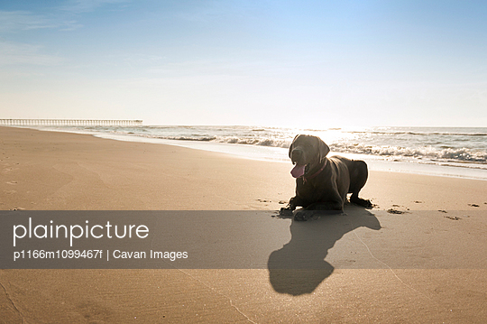 View of dog sitting on beach