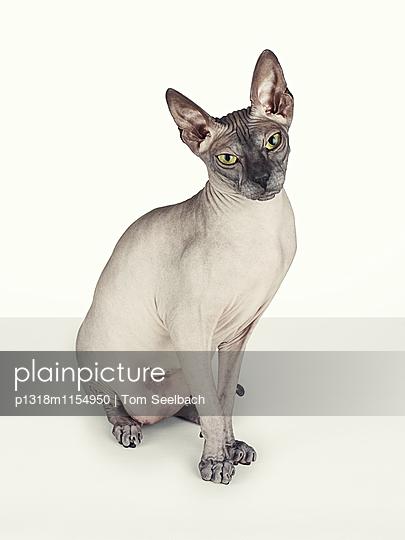 Nude Cat - p1318m1154950 von Tom Seelbach